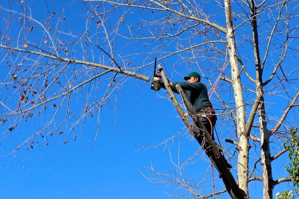 Contact Us-Temple Terrace FL Tree Trimming and Stump Grinding Services-We Offer Tree Trimming Services, Tree Removal, Tree Pruning, Tree Cutting, Residential and Commercial Tree Trimming Services, Storm Damage, Emergency Tree Removal, Land Clearing, Tree Companies, Tree Care Service, Stump Grinding, and we're the Best Tree Trimming Company Near You Guaranteed!
