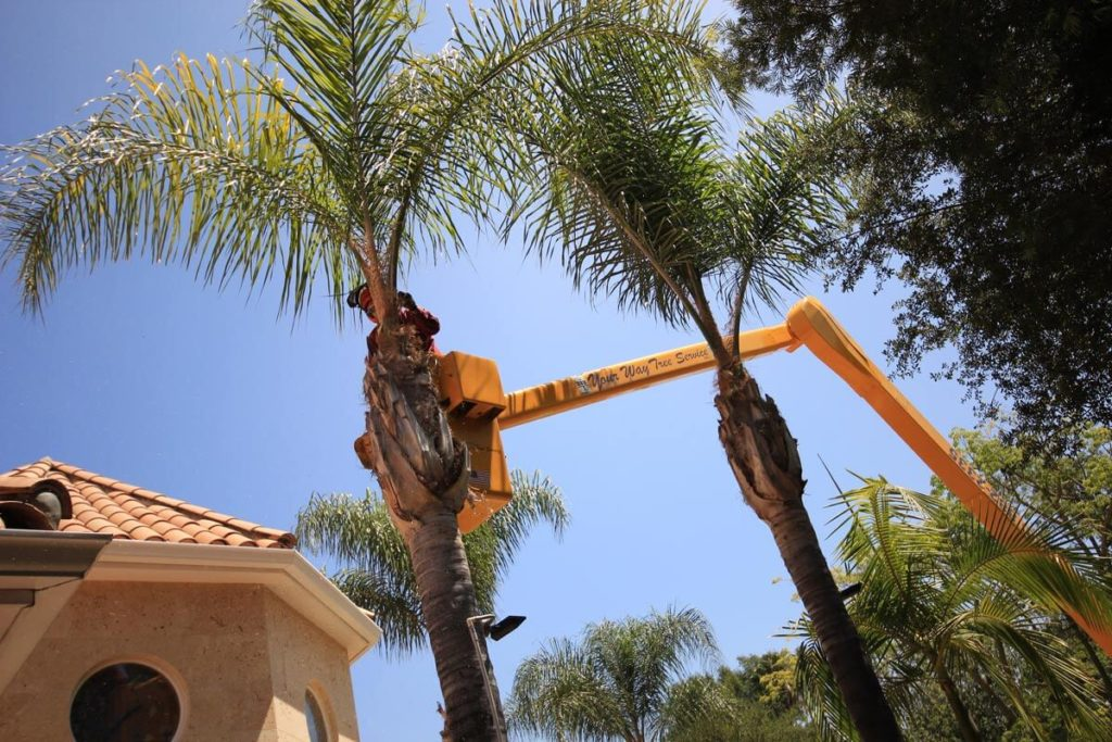 Palm Tree Trimming-Temple Terrace FL Tree Trimming and Stump Grinding Services-We Offer Tree Trimming Services, Tree Removal, Tree Pruning, Tree Cutting, Residential and Commercial Tree Trimming Services, Storm Damage, Emergency Tree Removal, Land Clearing, Tree Companies, Tree Care Service, Stump Grinding, and we're the Best Tree Trimming Company Near You Guaranteed!