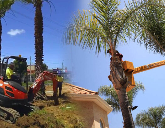 Palm tree trimming & palm tree removal-Temple Terrace FL Tree Trimming and Stump Grinding Services-We Offer Tree Trimming Services, Tree Removal, Tree Pruning, Tree Cutting, Residential and Commercial Tree Trimming Services, Storm Damage, Emergency Tree Removal, Land Clearing, Tree Companies, Tree Care Service, Stump Grinding, and we're the Best Tree Trimming Company Near You Guaranteed!