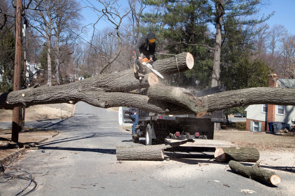 Residential Tree Services-Temple Terrace FL Tree Trimming and Stump Grinding Services-We Offer Tree Trimming Services, Tree Removal, Tree Pruning, Tree Cutting, Residential and Commercial Tree Trimming Services, Storm Damage, Emergency Tree Removal, Land Clearing, Tree Companies, Tree Care Service, Stump Grinding, and we're the Best Tree Trimming Company Near You Guaranteed!