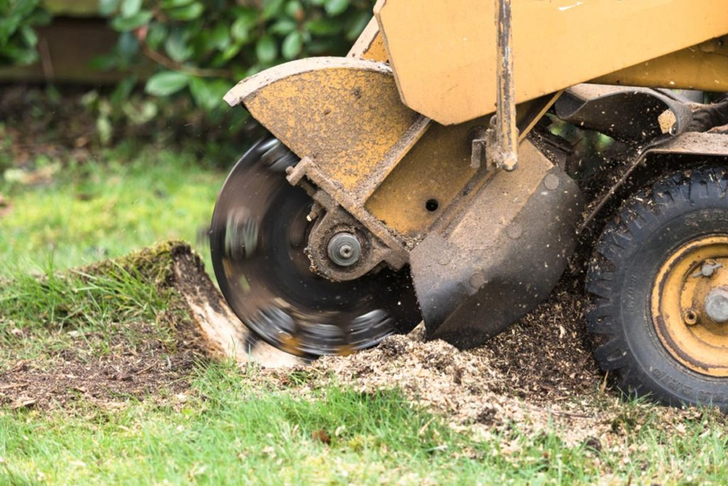 Stump Grinding-Temple Terrace FL Tree Trimming and Stump Grinding Services-We Offer Tree Trimming Services, Tree Removal, Tree Pruning, Tree Cutting, Residential and Commercial Tree Trimming Services, Storm Damage, Emergency Tree Removal, Land Clearing, Tree Companies, Tree Care Service, Stump Grinding, and we're the Best Tree Trimming Company Near You Guaranteed!