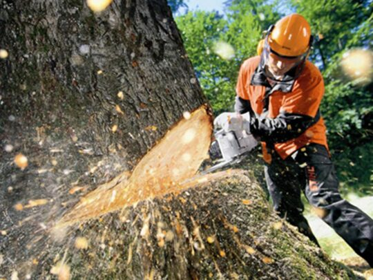 Tree Cutting-Temple Terrace FL Tree Trimming and Stump Grinding Services-We Offer Tree Trimming Services, Tree Removal, Tree Pruning, Tree Cutting, Residential and Commercial Tree Trimming Services, Storm Damage, Emergency Tree Removal, Land Clearing, Tree Companies, Tree Care Service, Stump Grinding, and we're the Best Tree Trimming Company Near You Guaranteed!