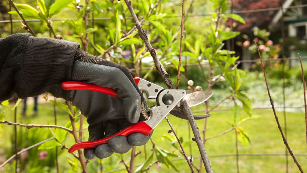 Tree Pruning-Temple Terrace FL Tree Trimming and Stump Grinding Services-We Offer Tree Trimming Services, Tree Removal, Tree Pruning, Tree Cutting, Residential and Commercial Tree Trimming Services, Storm Damage, Emergency Tree Removal, Land Clearing, Tree Companies, Tree Care Service, Stump Grinding, and we're the Best Tree Trimming Company Near You Guaranteed!