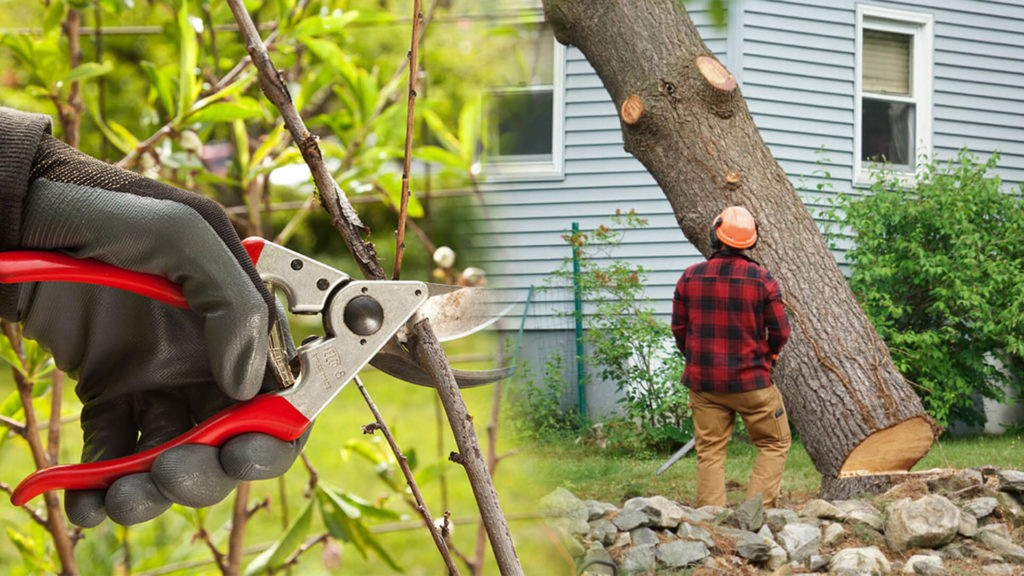 Tree pruning & tree removal-Temple Terrace FL Tree Trimming and Stump Grinding Services-We Offer Tree Trimming Services, Tree Removal, Tree Pruning, Tree Cutting, Residential and Commercial Tree Trimming Services, Storm Damage, Emergency Tree Removal, Land Clearing, Tree Companies, Tree Care Service, Stump Grinding, and we're the Best Tree Trimming Company Near You Guaranteed!